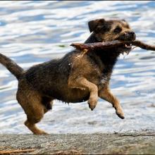 Hunden Bosse