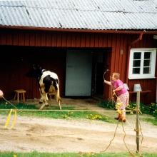Margit föser ko