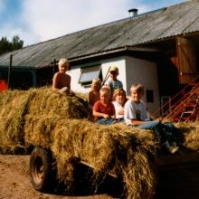 Höbärgning hos Claessons sommaren 1984, eller 1985.