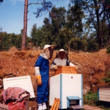 Hugo jobbar med sina bikupor