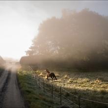 Hästen och solen