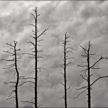 Les arbres morts