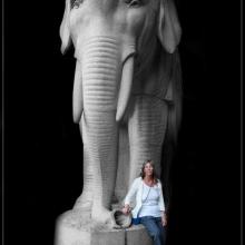 Gaj och elefanten